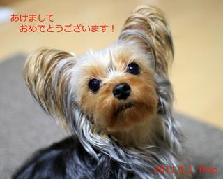 pino_gantan.jpg